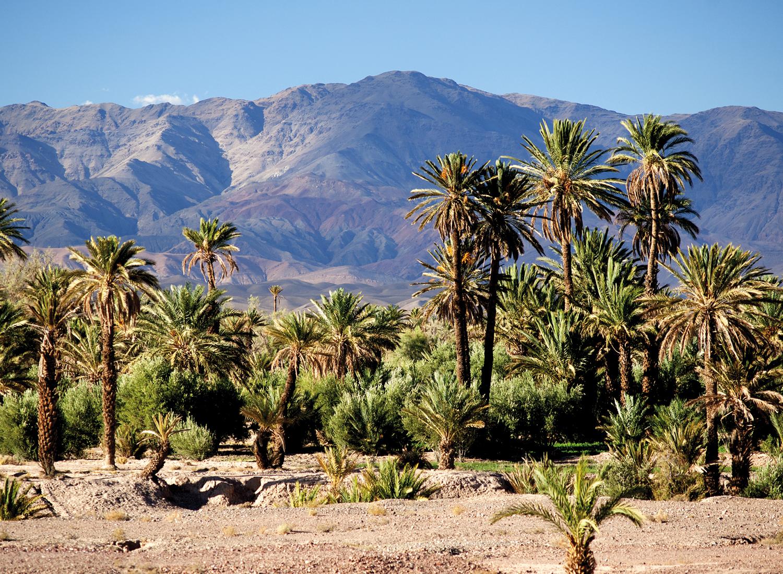 Palmvallei van Skoura