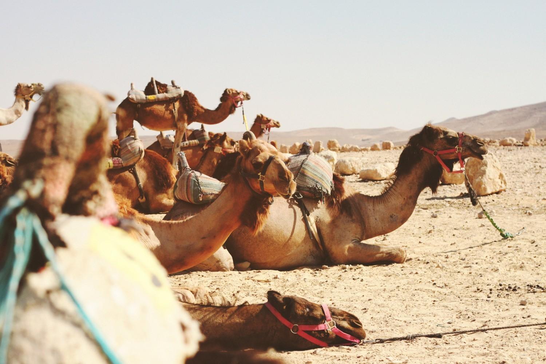 Blog bericht Deze 5 excursies in Marokko moet je gedaan hebben